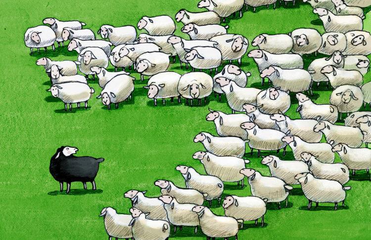 Black sheep work campers - RV Park Marketing